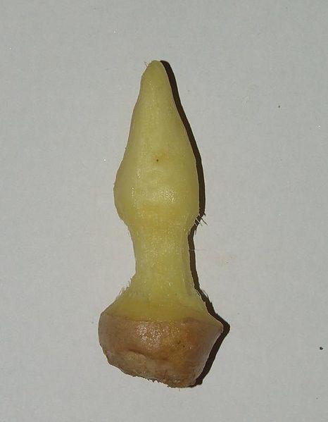 Figging - Ungewöhnliche Sexpraktiken